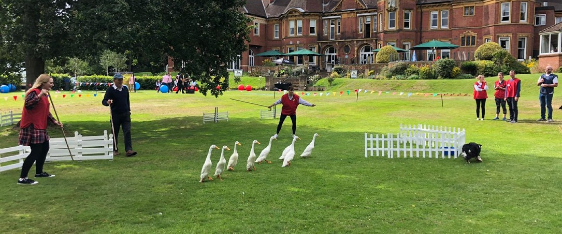 Team Building Duck Herding at Moor Hall Hotel Spa
